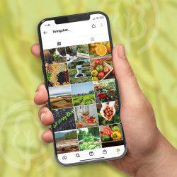 estretegia redes sociales agricultura 250x250 - Estrategia de acciones en redes sociales